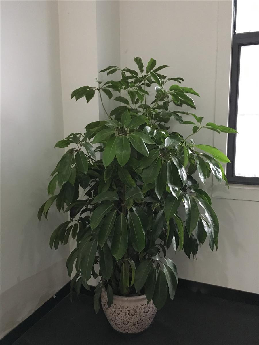 室内绿植种类多,养护方法各不同