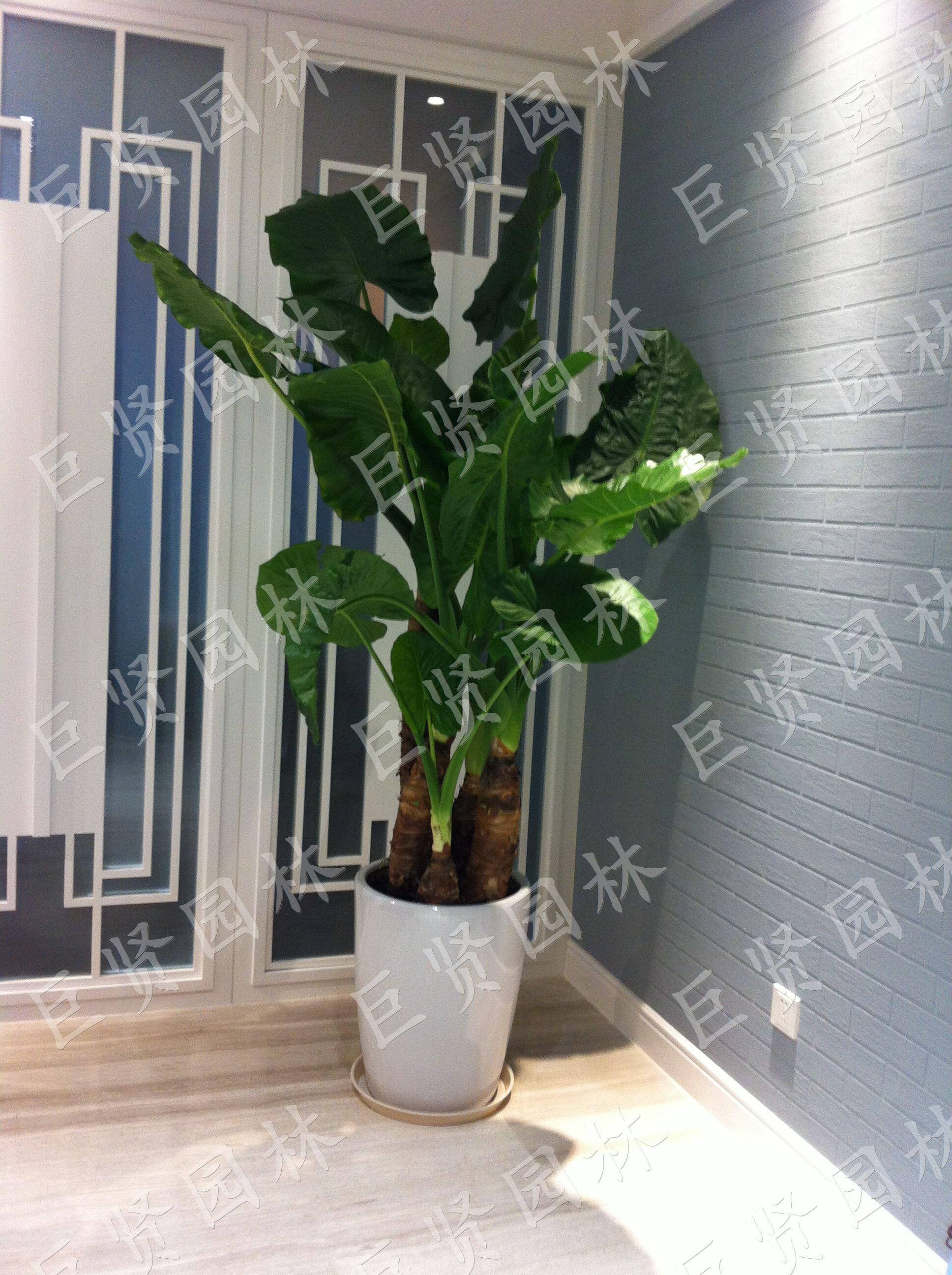 办公室绿植租赁室内租摆这些而植物
