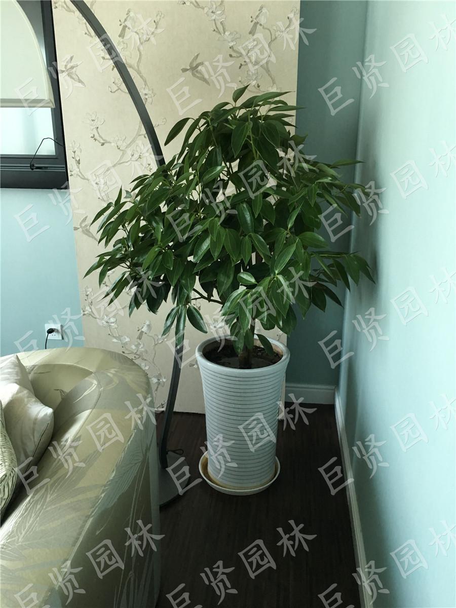 植物租赁养花更加方便