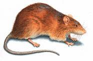 上海灭老鼠