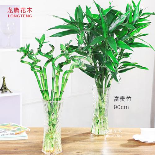 深圳植物租賃