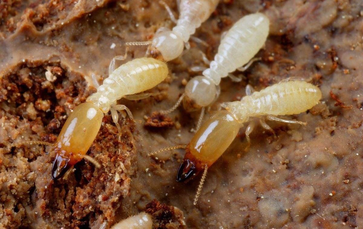 白蚁危害的常见部位有哪些?