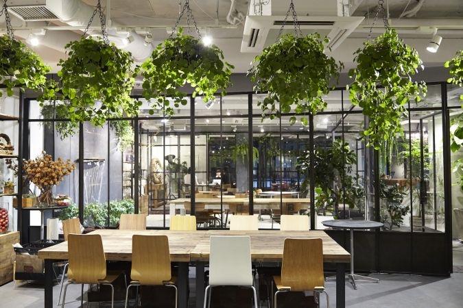 办公风水绿植
