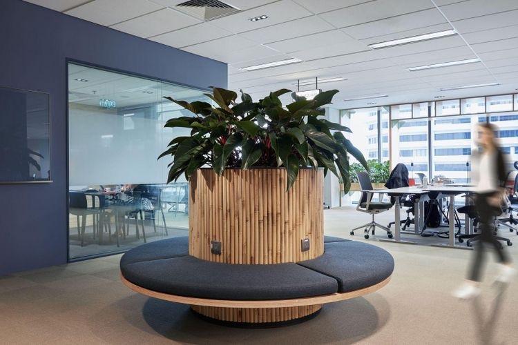 办公室装修绿植
