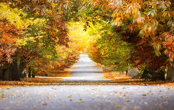 在英国留学,不要错过这些风景如画的秋景~