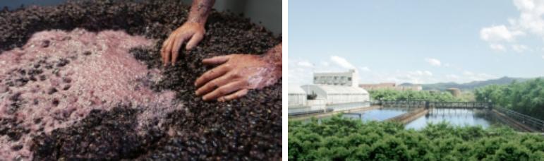 食品加工 & 发酵行业废水解决方案