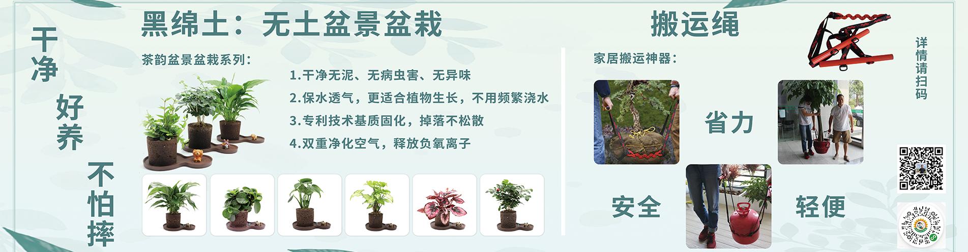 杭州云乘园艺科技有限公司