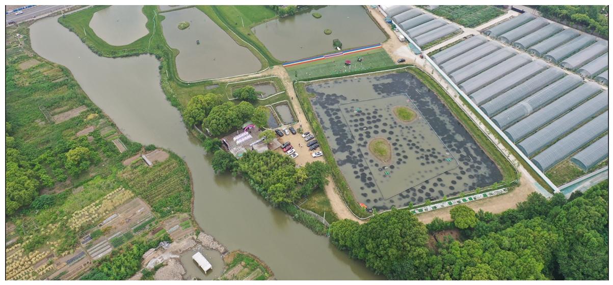 宏春大闸蟹养殖基地