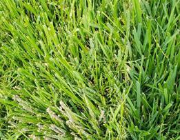 园林绿化养护措施之草坪、绿篱、树木养护!