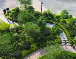 园林景观设计中的绿篱