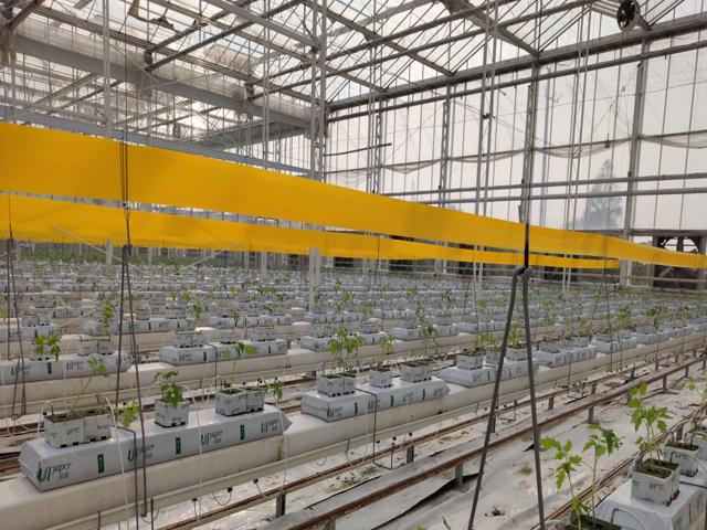 为何岩棉基质能成为发达国家温室种植的宠儿?