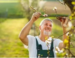 园林绿化养护主要工作有哪些?