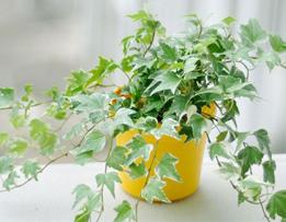 家庭养花如何选择植物?