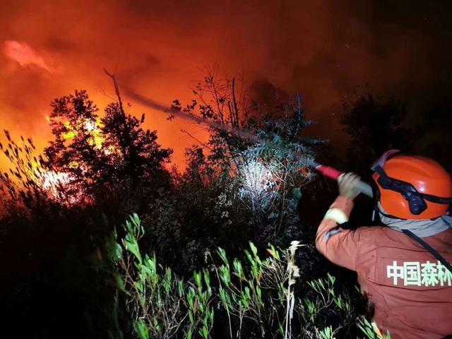 森林防火势在必行