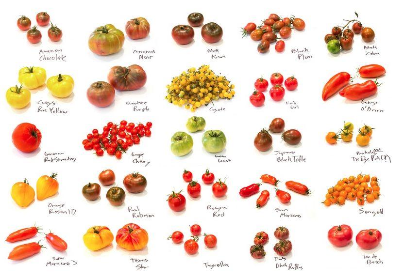 口水预警!岩棉无土栽培这些有颜,又营养的番茄,谁能拒绝?