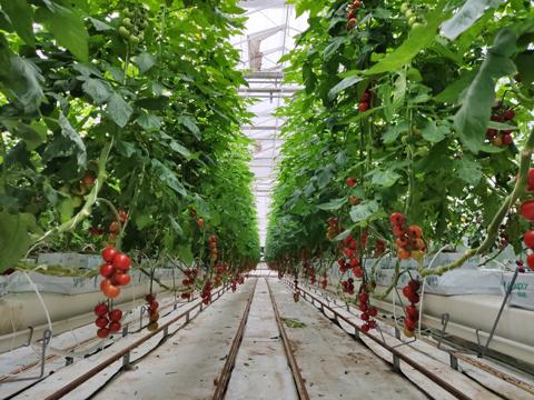 基质孔隙度到底对植物生长有何影响?