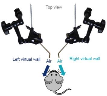 Virtual Reality虚拟实境