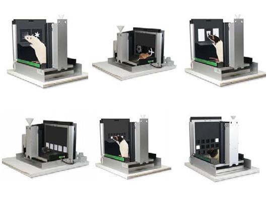 动物触屏行为分析系统