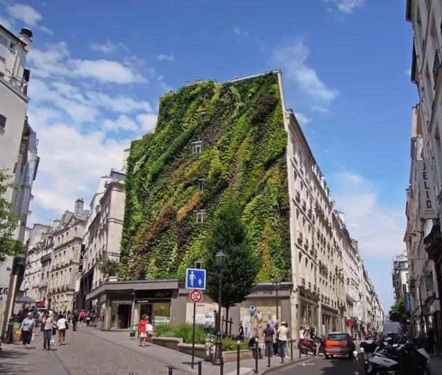 植物墙-让城市成为热带雨林