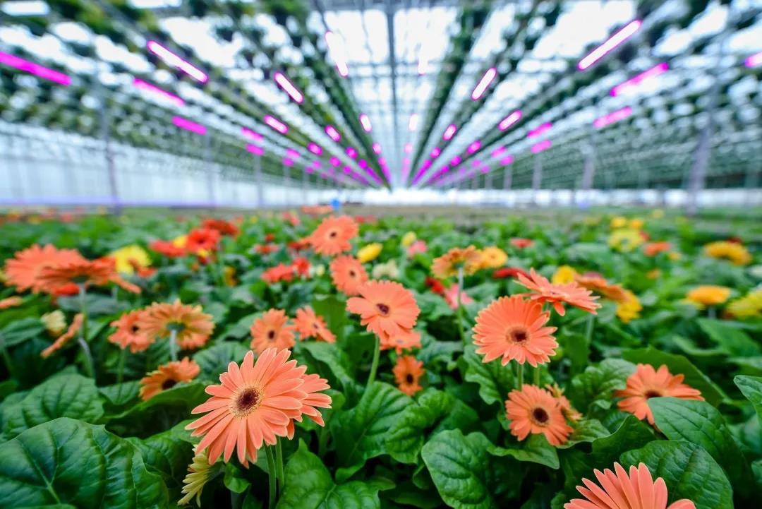 想要花卉具备高经济效益,种植方式是关键!