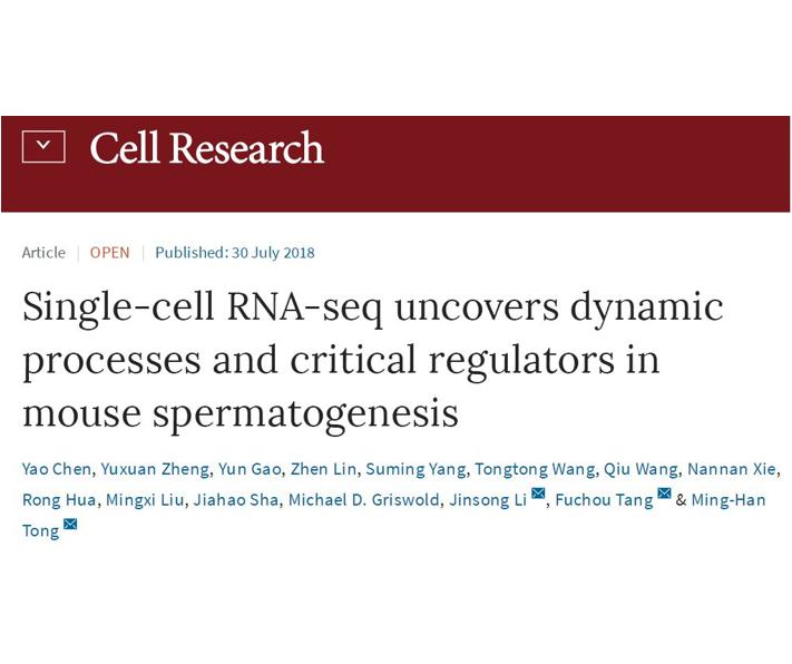 中国科学家完成小鼠精子发生过程转录组动态变化图谱