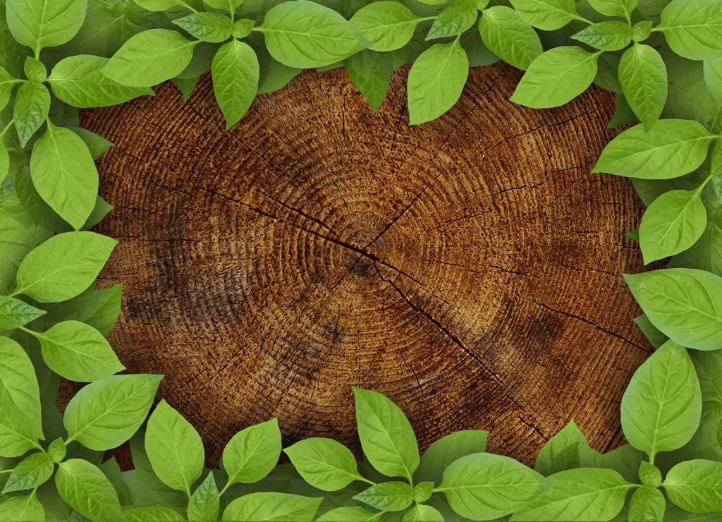 藻蓝蛋白作为叶面肥在农业上的应用