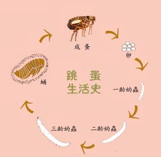 深圳灭跳蚤公司