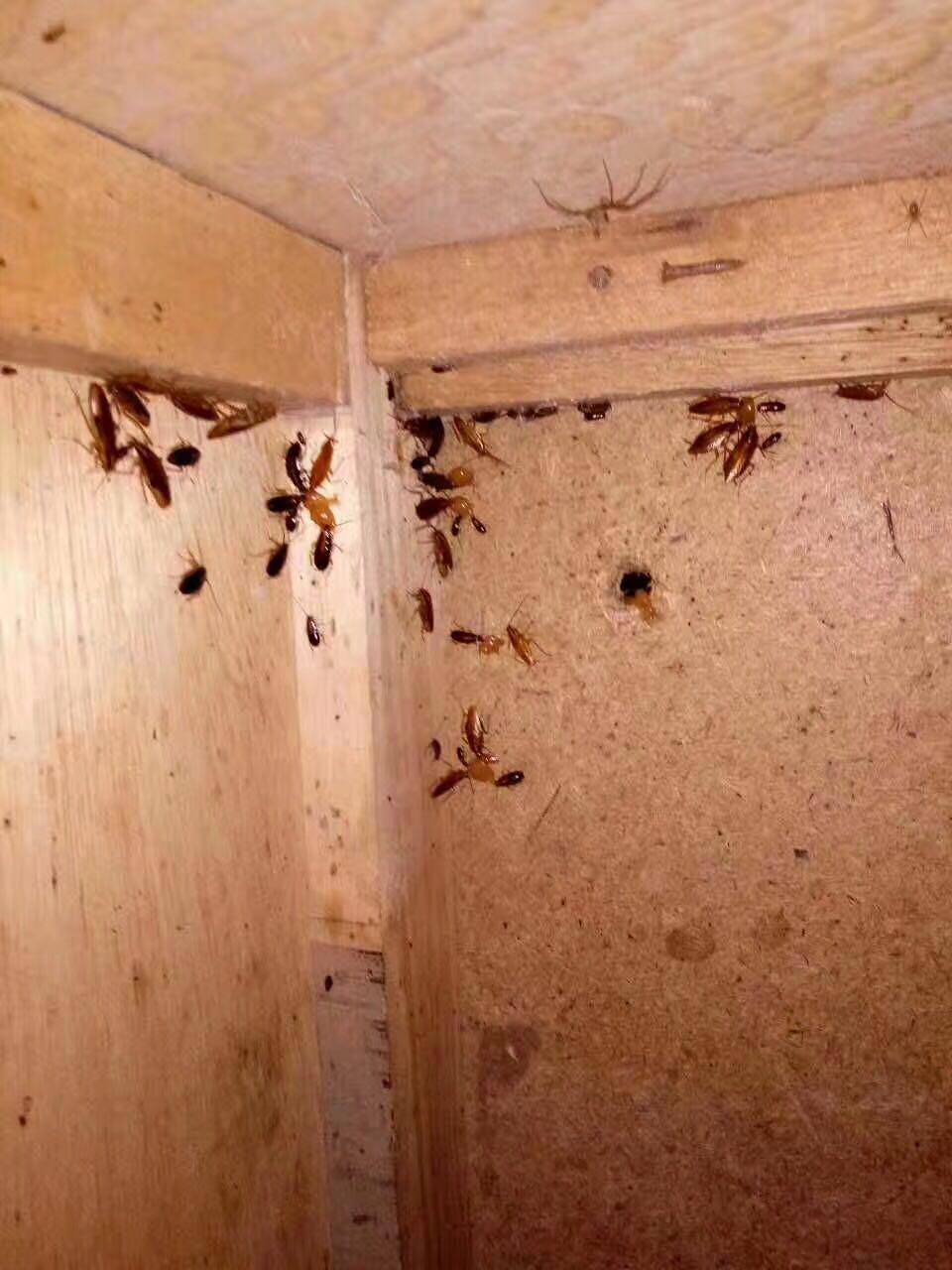 蟑螂防治之补充蟑螂科学知识_深圳市创卫环境卫生服务有限公司