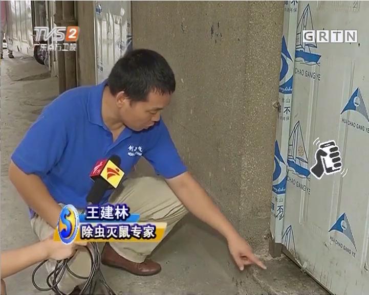 灭蚂蚁之蚂蚁知识补充_深圳市创卫环境卫生服务有限公司