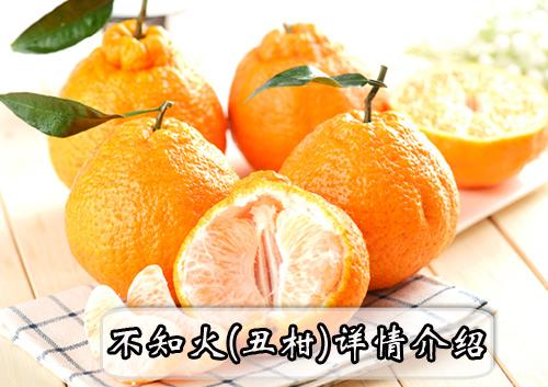 不知火(丑柑)