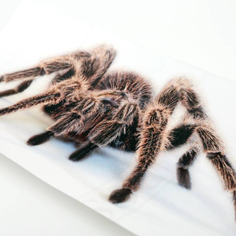 蝎子蜘蛛蜥蜴动物车贴