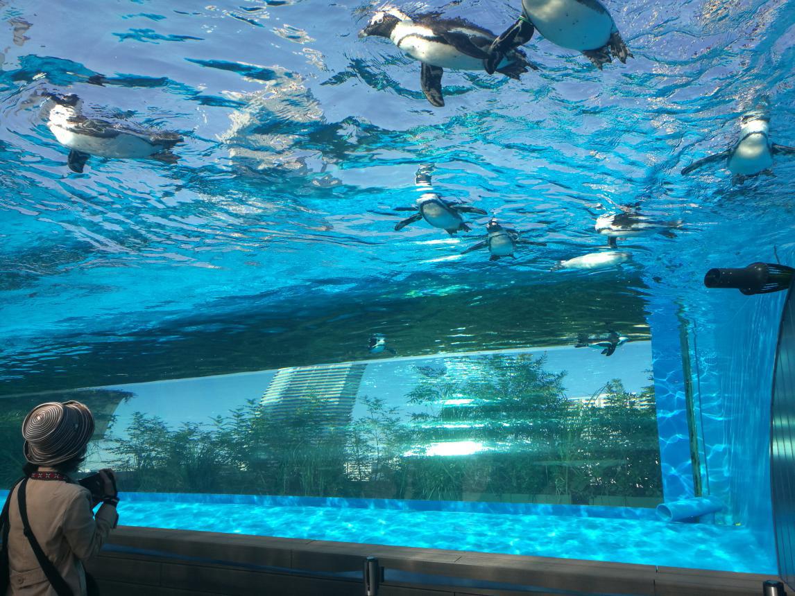 海洋馆设计之天空中的海洋馆&日本阳光城海洋馆