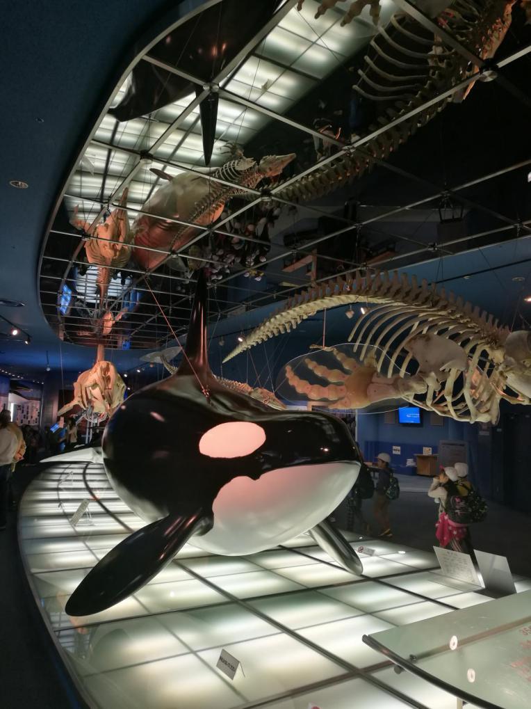 艺海园海洋馆设计建造考察之日本名古屋海洋馆虎鲸