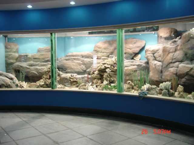 上海动物园建造过程