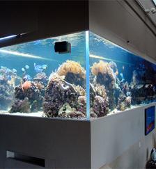 镶嵌式鱼缸定制