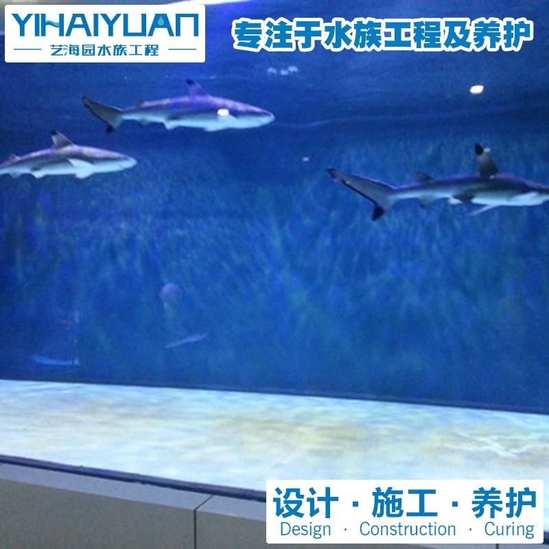 鲨鱼缸定制