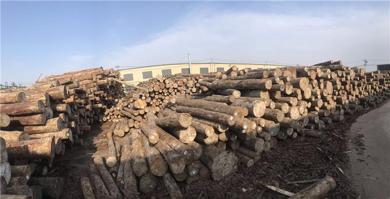 荆门附近木材厂