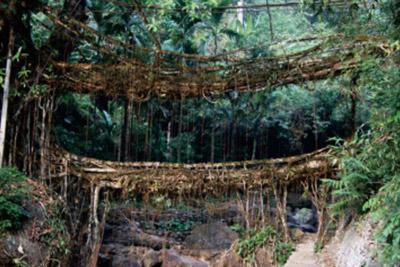 好的木质吊桥应具备哪些特点?