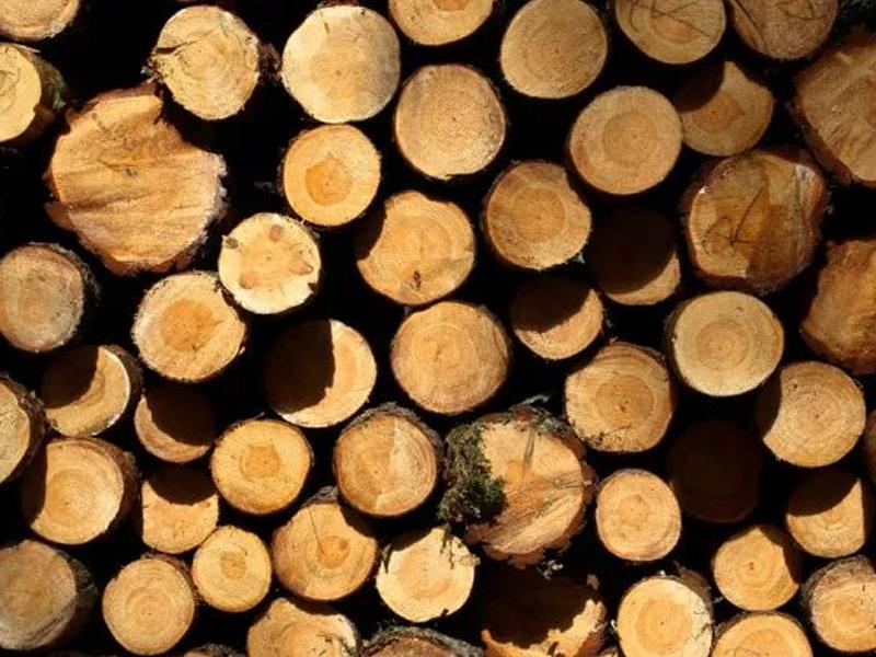 为什么实木家具那么贵?