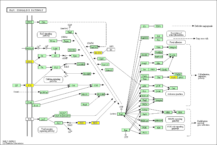 富集峰/差异富集区相关基因KEGG通路分析