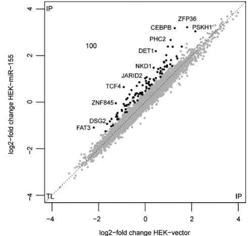 过表达miR-155细胞中明显变化mRNA的散点图