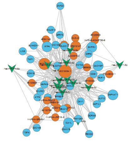 circRNA/LncRNA-miRNA-mRNA网络构建