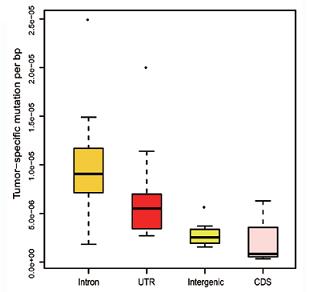 前列腺癌的基因组不同位置上的体突变分布