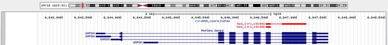 环状RNA的可视化