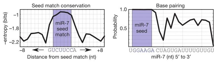 CDR1as在不同物种中具有保守的miR-7结合位点