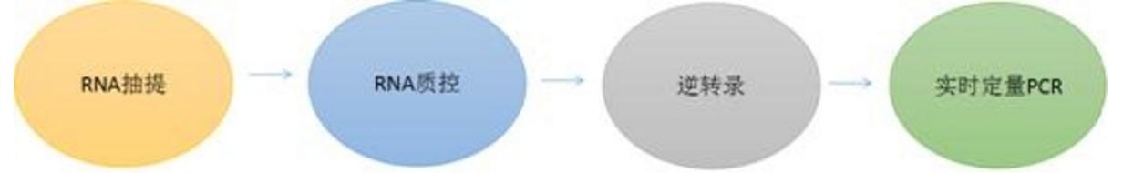 云序生物环状RNA实时定量 PCR服务流程: