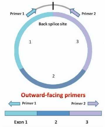"""""""Outward-facing""""引物设计策略"""