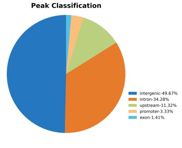 蛋白因子富集峰(peak)注释