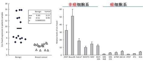 circ-Foxo3癌细胞中表达情况