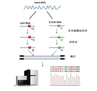 (m5C)RNA甲基化测序流程